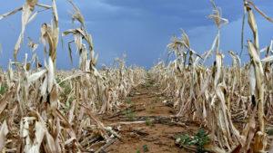 Solidariteit Helpende Hand hou kos op droogtegeteisterde boere se tafels
